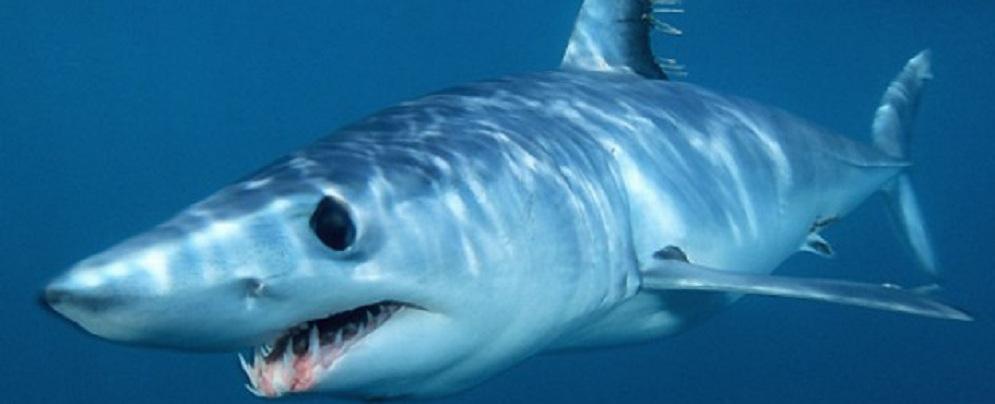 Pescatore gioiosano avvista 2 squali a Caulonia