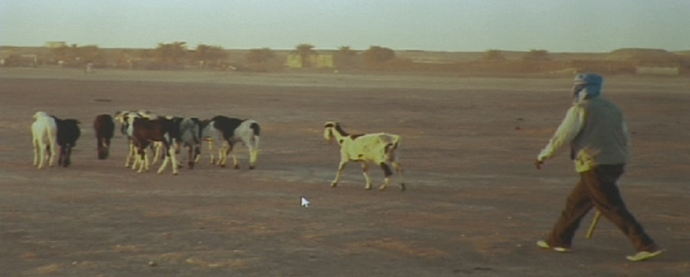 2.700 KM DI MURA: IL RACCONTO SAHARAWI DI NINO VITALE