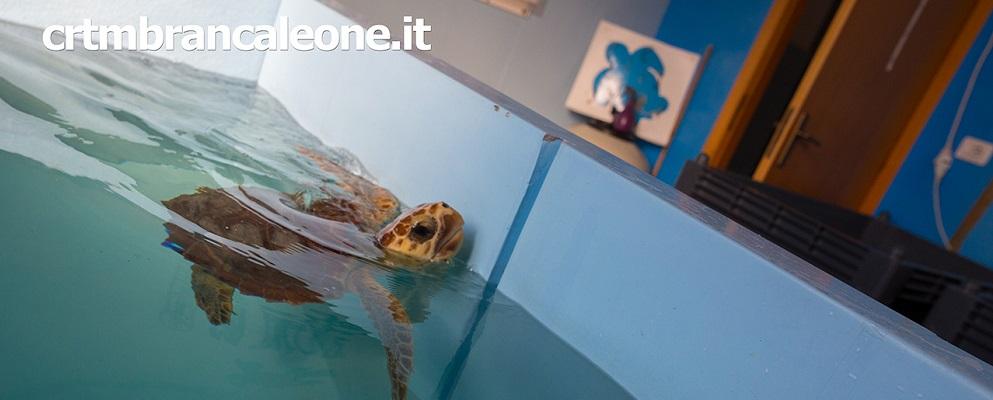 Anche oggi si possono vedere e sostenere le tartarughe
