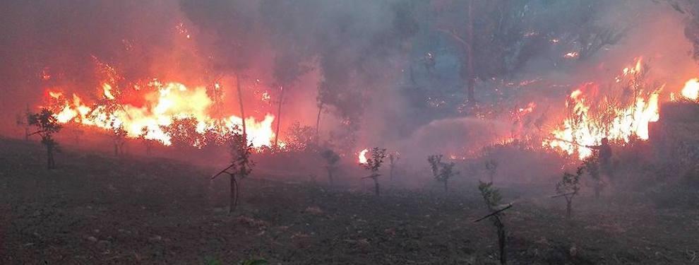 Incendio in località Carrubara di Caulonia