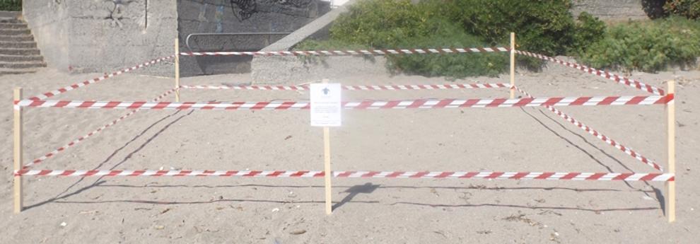 Le Tartarughe depongono sulla spiaggia di Diamante