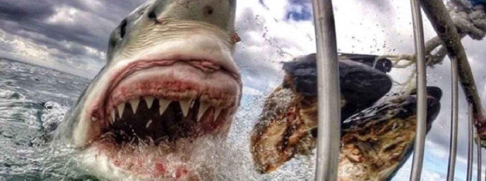 Si salva dall'attacco di uno squalo di 4 metri per un soffio