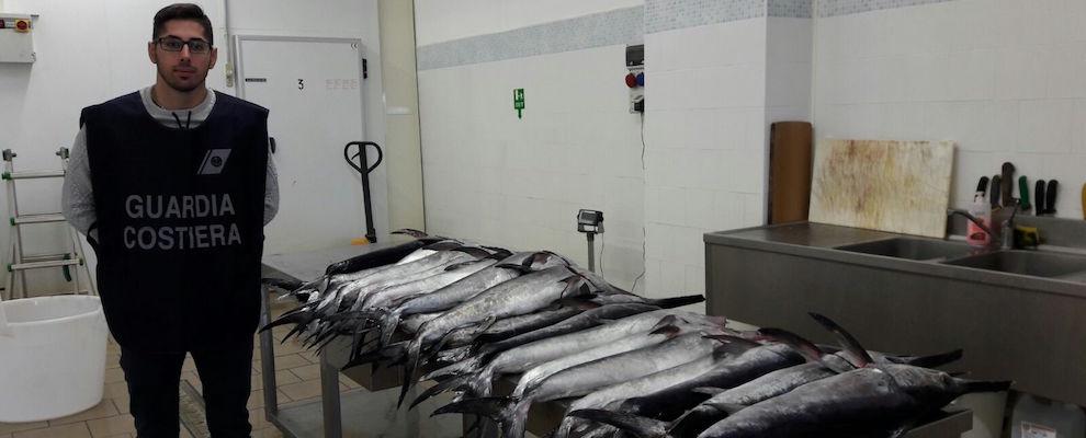 Roccella Jonica: Guardia Costiera sequestra circa 80 kg di pesce spada sottomisura
