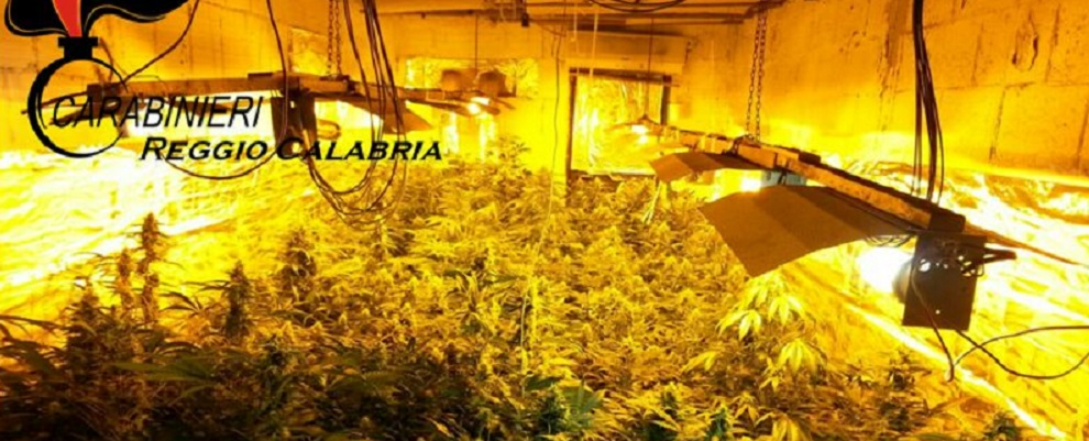 Bovalino: sequestro serra coltivazione marijuana – video