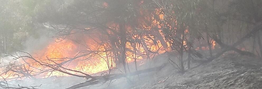 Ennesimo incendio lungo la pista ciclabile Caulonia-Roccella