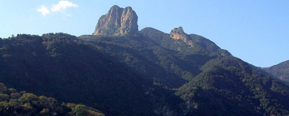 Parco dell'Aspromonte eccellenza biogeografica in Italia. 25 alberi monumentali presenti
