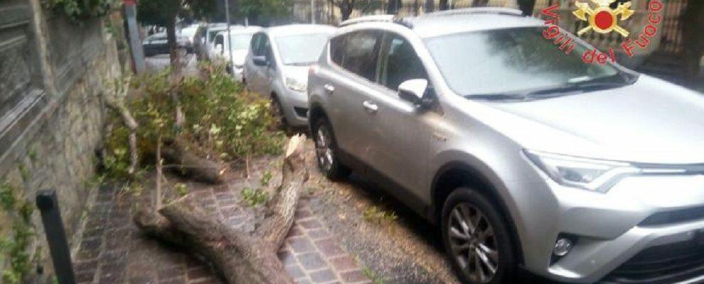 Raffiche di vento e pioggia intensa sferzano la regione, disagi in Calabria