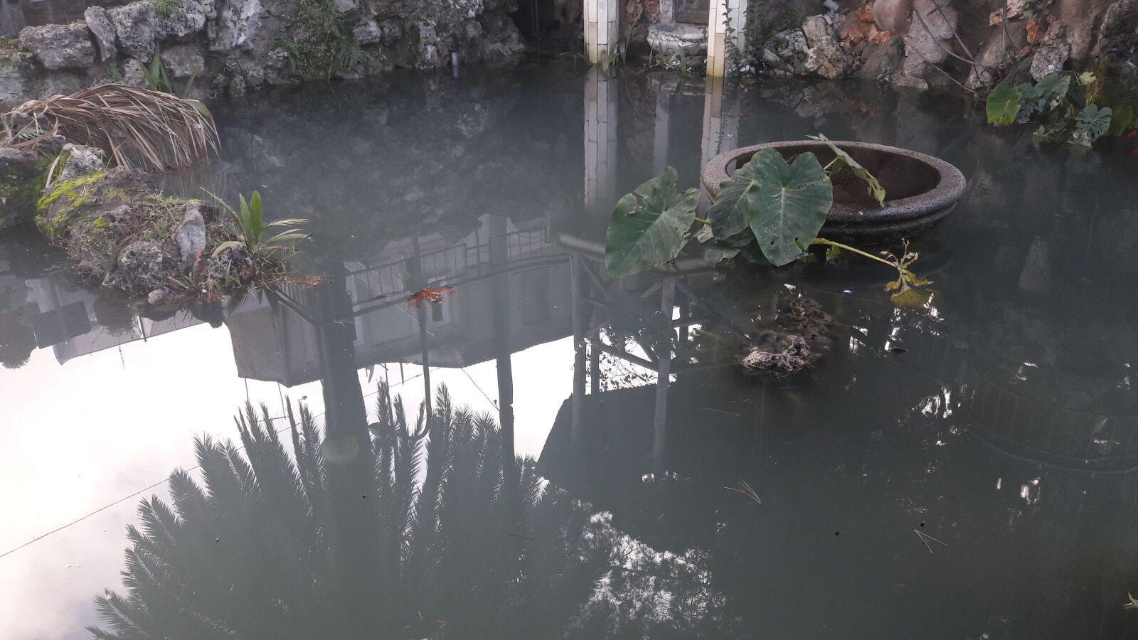 Avvelenate acque del laghetto di santa maria a polistena for Pulizia laghetto