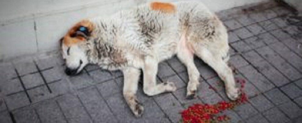 A Briatico cane arrostito e mangiato