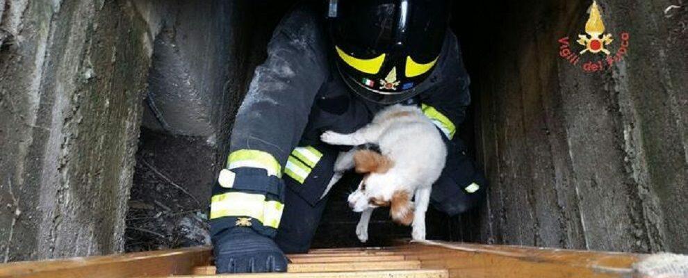 Cucciolo di cane finisce in un tombino, i vigili del fuoco lo salvano