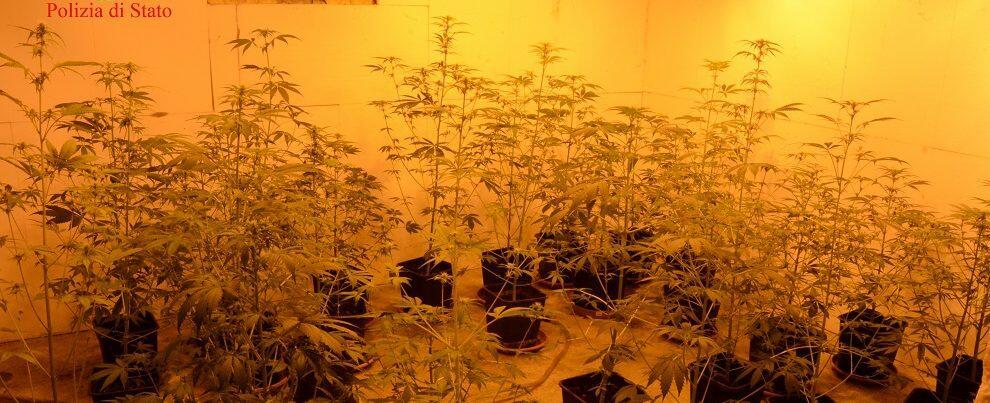 Rinvenuta serra di cannabis in appartamento, un arresto a Gioia Tauro