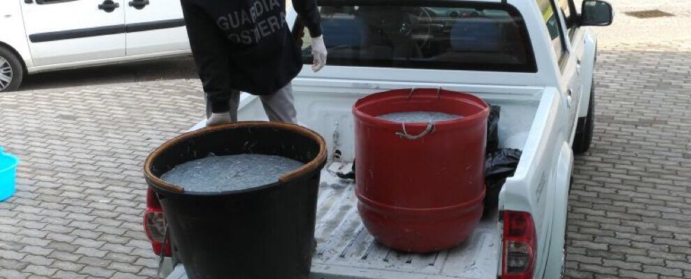 Sequestrati 300 kg di novellame sardo e denunciato un venditore non autorizzato di Marina di Gioiosa Ionica