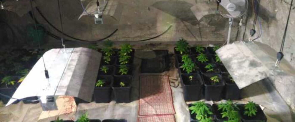 Ardore: un arresto per detenzione di droga, sequestrati oltre 9 kg di marijuana