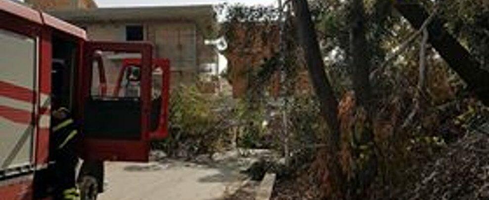 Caulonia, albero caduto in via Pietro Calafiore, sfiorata la tragedia
