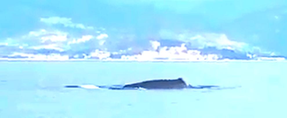 Incredibile incontro con una balena a Caulonia! – video