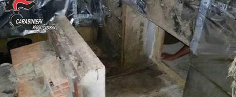Scoperto bunker adibito a serra di marijuana nella Locride