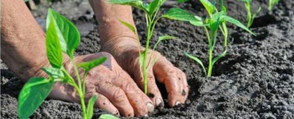 Agricoltura, erogati pagamenti per oltre 55 milioni di euro agli agricoltori calabresi