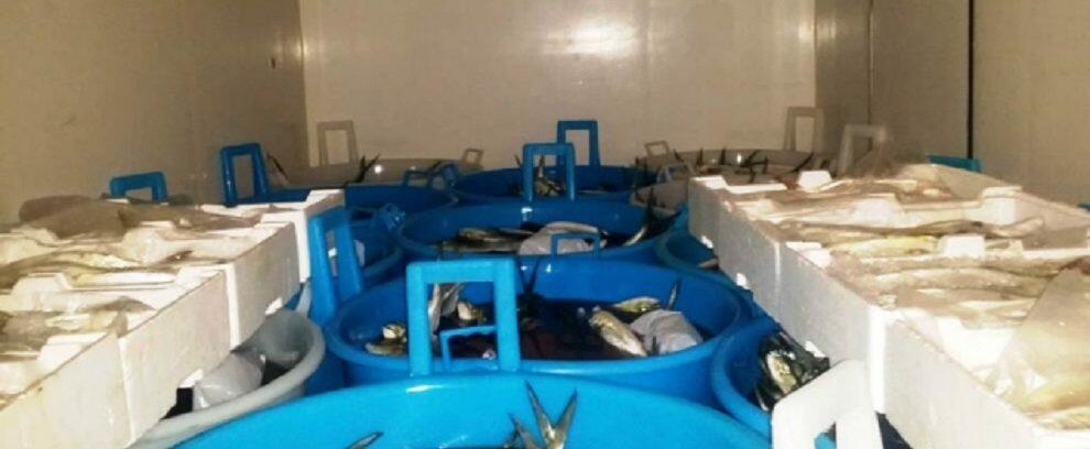 Fermato uomo di Marina di Gioiosa Ionica alla guida di un furgone con oltre 700kg di prodotto ittico