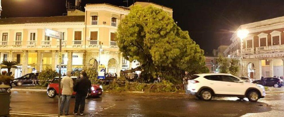 Maltempo in Calabria: cade il vecchio pino simbolo della città, paura per i passanti