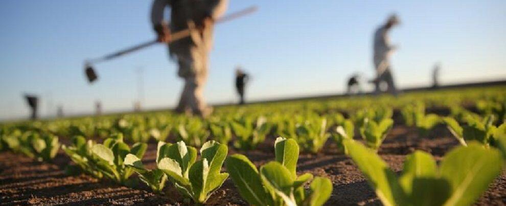 Danni all'agricoltura 2015/2017, procede l'iter per la richiesta dei contributi