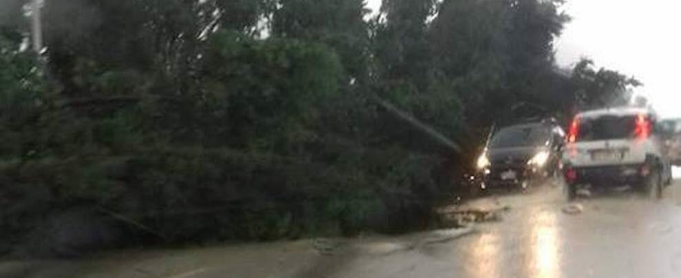 Ancora disagi a causa del maltempo sulla S.S. 106: Strade allagate e alberi caduti