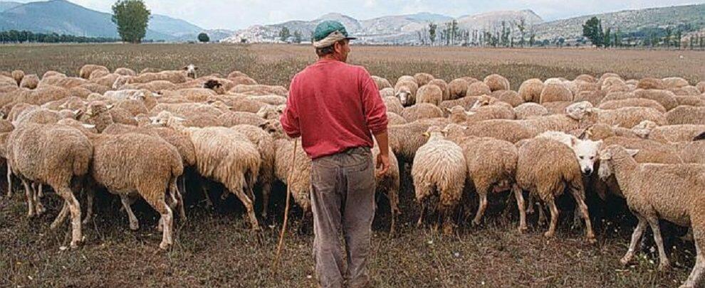 Rapinato un pastore mentre era intento a pascolare il gregge: è caccia al rapinatore