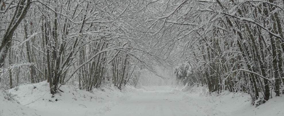 """Cinque cauloniesi denunciati perché sono andati """"a vedere la neve"""" nonostante le disposizioni anti contagio"""