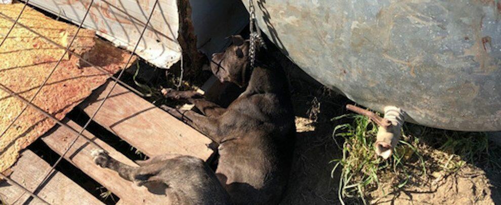 Cane morto soffocato da una catena, denunciato un operaio