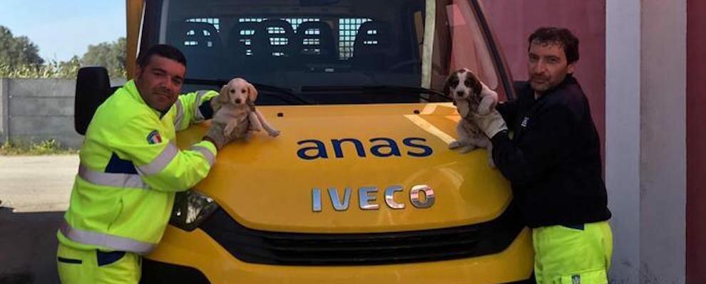 Operai Anas salvano cuccioli. Affidati all'Oasi di Gioiosa
