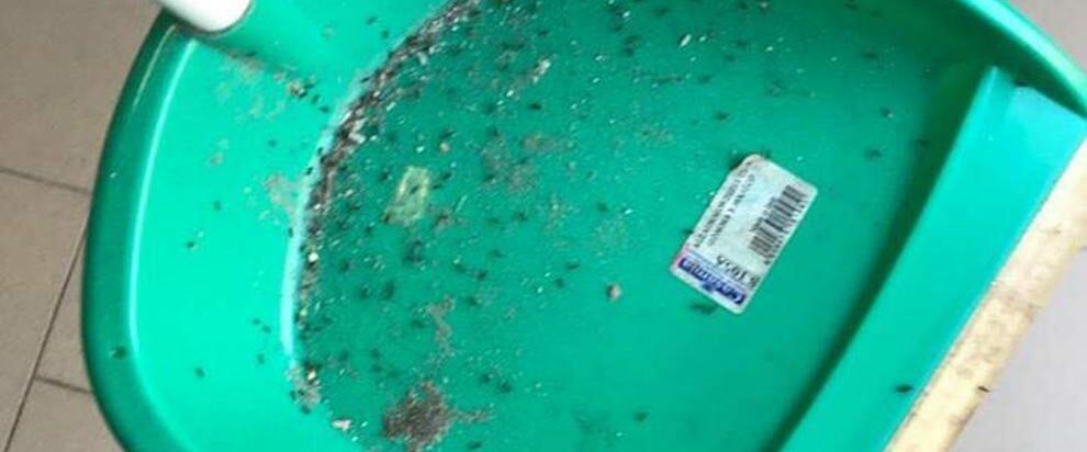 Scuola elementare di Roccella Jonica invasa dalle formiche
