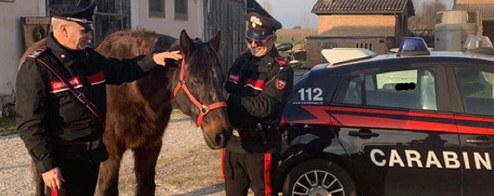 Truffa su acquisto cavalli, 8 denunciati