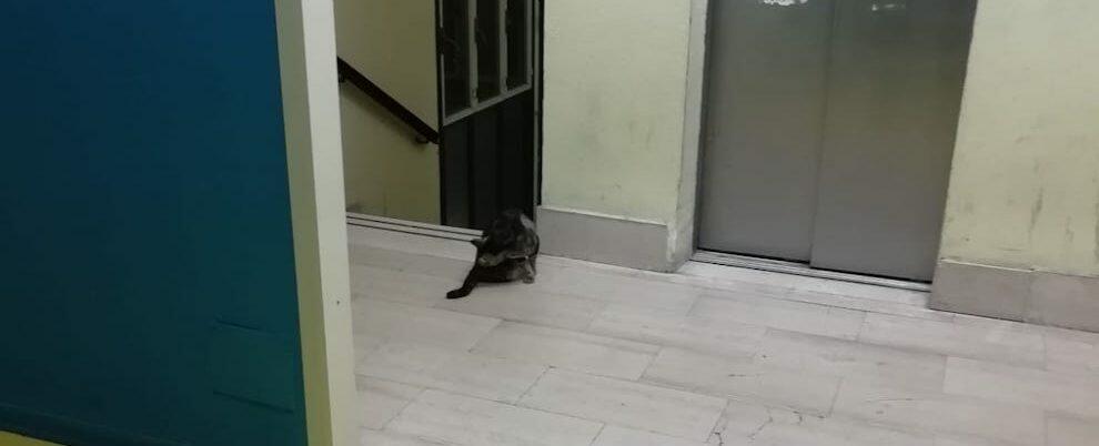 Foto del giorno: gatto in visita all'ospedale di Locri