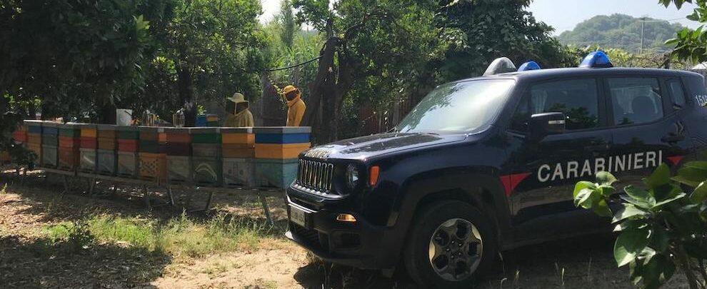 I Carabinieri forestali denunciano sei apicoltori