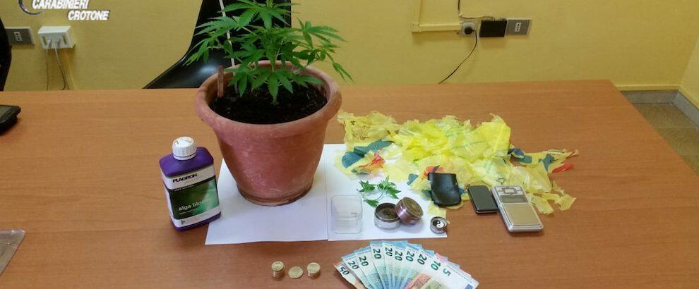 Coltivava marijuana in casa, denunciato un minorenne