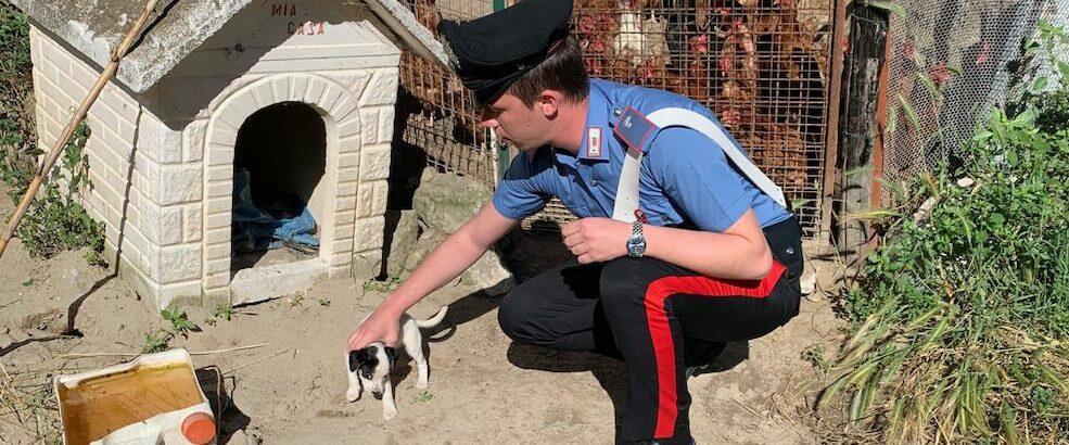 Cagnolino maltrattato salvato dai carabinieri