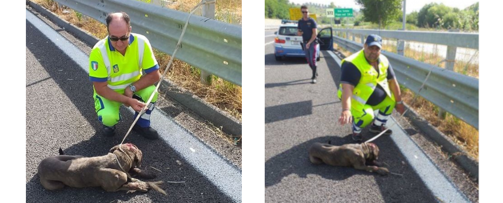 Salvato un cane ferito sulla A2 Salerno-Reggio Calabria