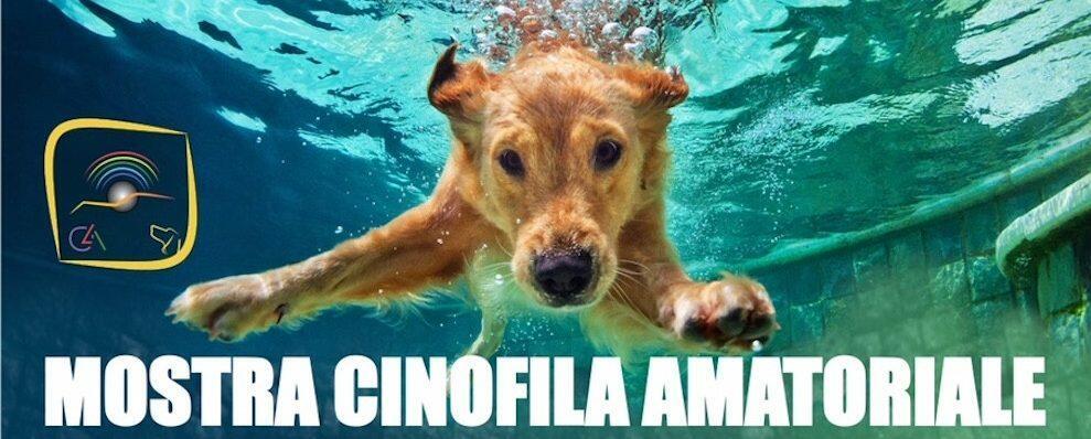 Domani a Siderno una mostra cinofila amatoriale
