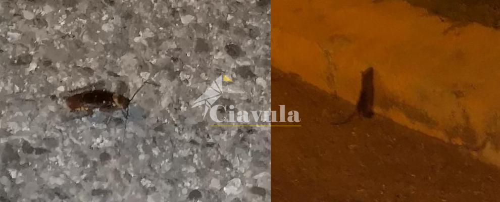 Topi e blatte sul lungomare di Caulonia