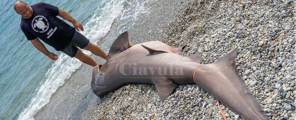 Lo squalo arrivato a riva nella Locride è solo una vittima dell'uomo