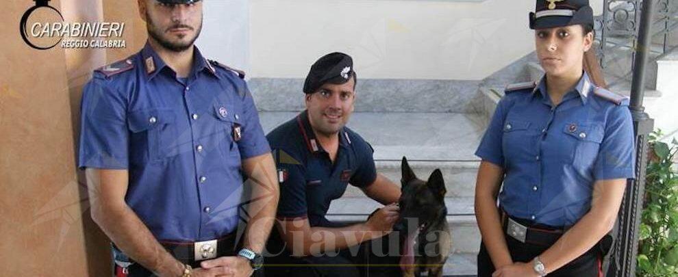 """Grazie all'infallibile fiuto della cagnolina """"Manco"""" i carabinieri scovano oltre 1kg di stupefacenti"""