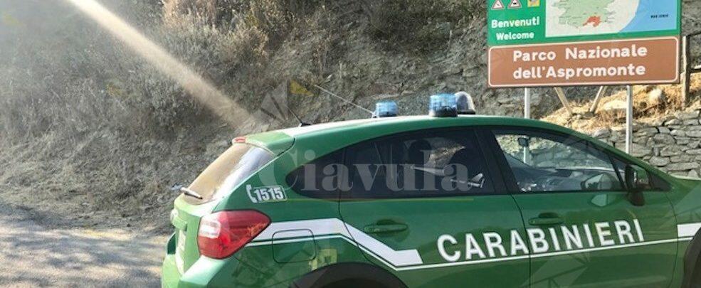 Calabria, attività antibracconaggio. I carabinieri forestali sequestrano varie armi. Otto persone denunciate