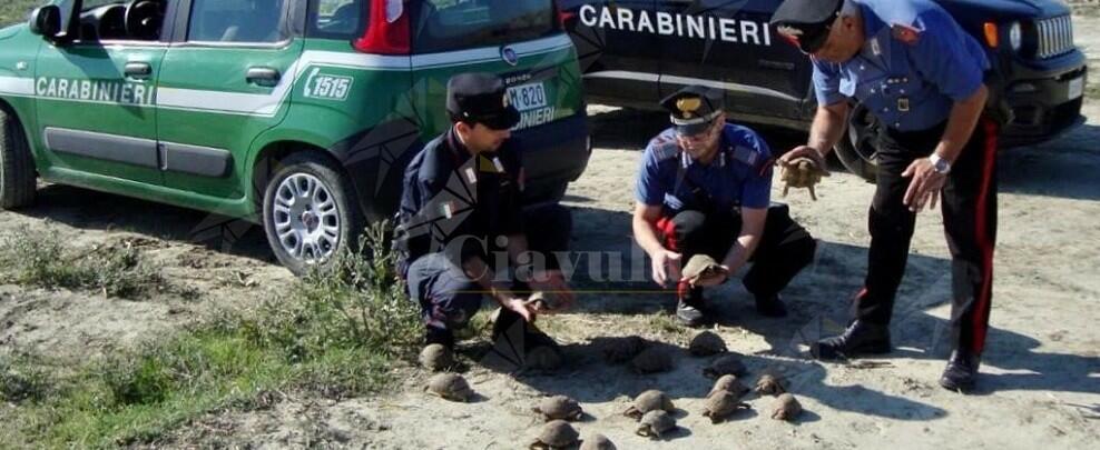 Calabria: detiene illegalmente 47 testuggini di specie protetta, denunciato