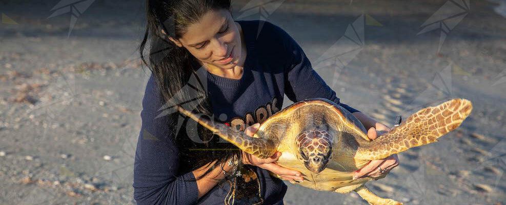 Raccolta fondi urgente: un'ambulanza per le tartarughe marine di Brancaleone