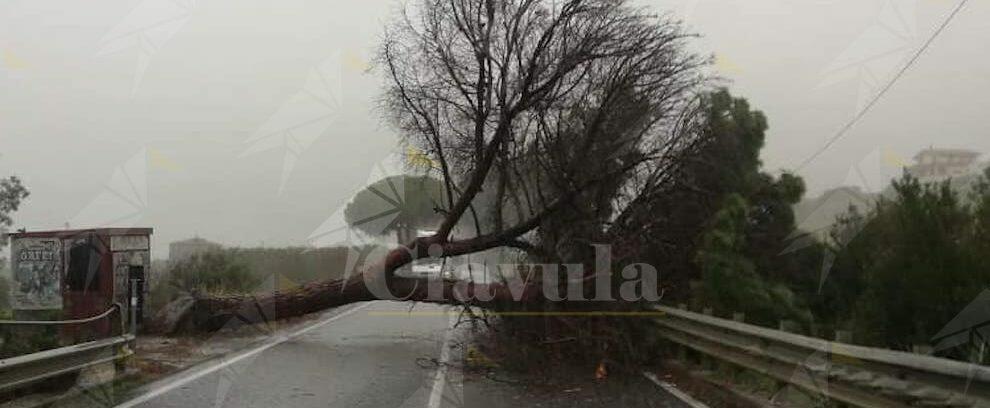 Albero cade sulla S.S. 106, disagi per gli automobilisti
