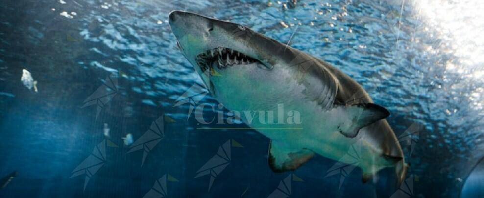 Dà da mangiare ad uno squalo e viene ferito gravemente al braccio. Paura per Tiago bimbo di 9 anni
