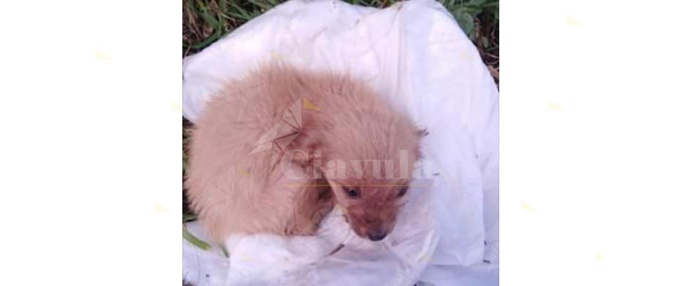 Caulonia, cucciola abbandonata nei pressi della fiumara Amusa