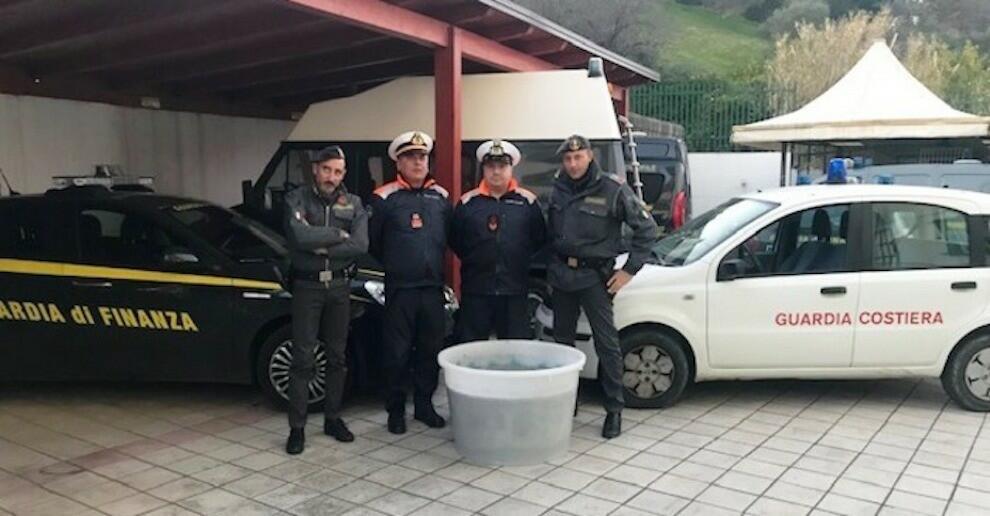 Fermato un furgone sulla S.S. 106 con oltre 150kg di bianchetto illegalmente trasportato