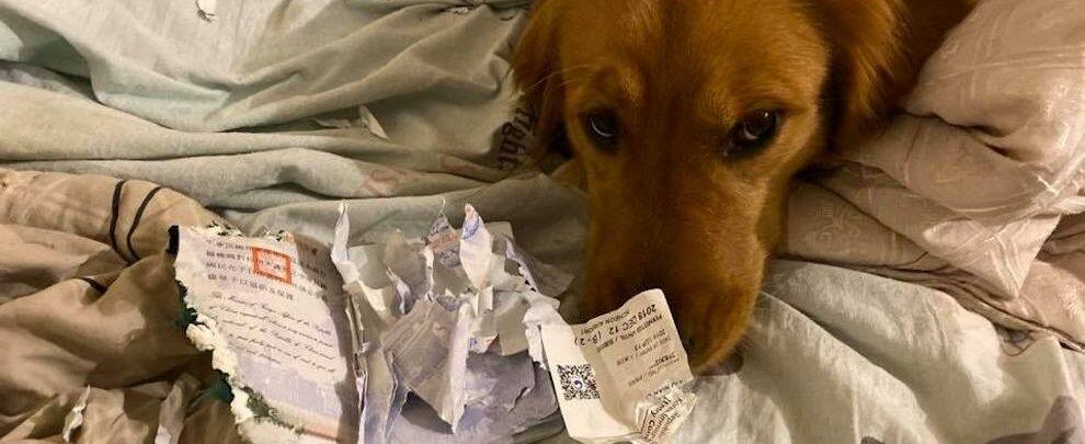 """Coronavirus, cane mangia il passaporto e lei non parte per Wuhan: """"Mi ha salvato la vita"""""""