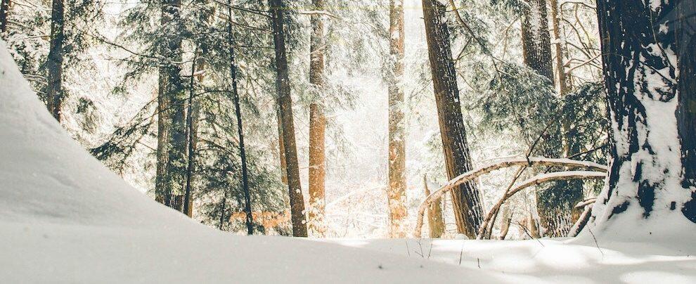 Inizio anno col botto: 80cm di neve e boom di presenze in Sila