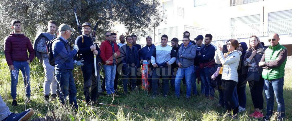 Tecniche di potatura e razionale gestione dell'oliveto: il corso di formazione all'ITA di Caulonia